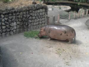 One depressed hippopotamus.